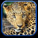 Leopardo Fondos de Pantalla icon