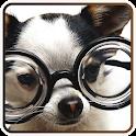 강아지 IQ 테스트 icon