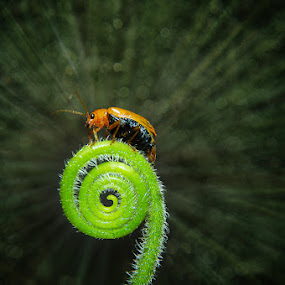 by Ian Reducer - Animals Insects & Spiders