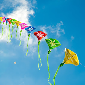 Up up an away by Sharmila Narwani - Artistic Objects Other Objects ( blue sky, color, kites, colorful, mood factory, vibrant, happiness, January, moods, emotions, inspiration,  )