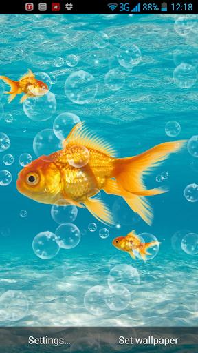 金魚動態壁紙