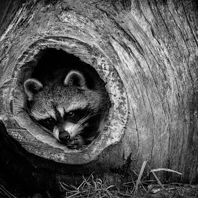 Cubby Hole by Brandon Seidl - Black & White Animals