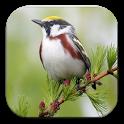 Masteran Burung Mancanegara icon
