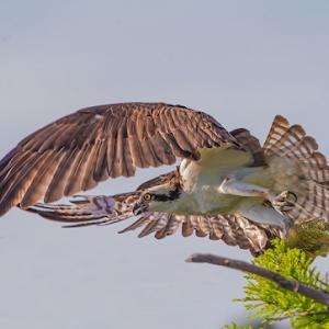 Takeoff-with-Fish.jpg