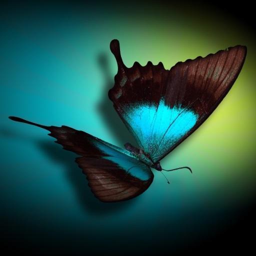 Butterfly 3D Magic Wallpaper