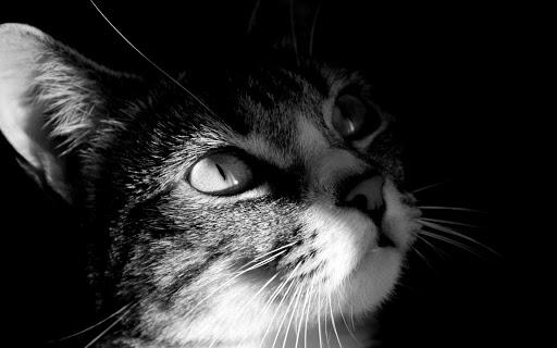 ネコの絵のHD