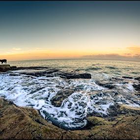 Atlantic ocean sunrise by Sergio Moya - Landscapes Waterscapes ( argentina, dogs, sunset, sea, sunrise, beach, landscape, rocks,  )