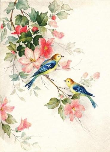 Bird Wallpapers HD
