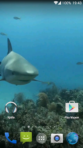 Sharks. Video Wallpaper