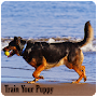Train Your Puppy APK icon