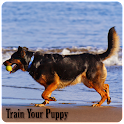 Train Your Puppy icon
