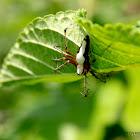 Hide and seek spider