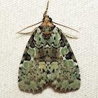Marbled-green Leuconycta