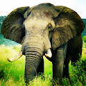 Elephant Wallpaper LWP icon