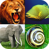 Animals Encyclopaedia