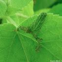 Insect Mimic Leaf