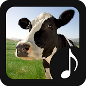 Cow Sounds