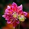 IMG_1366-15.jpg