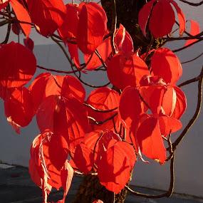 by Brigi Li - Nature Up Close Trees & Bushes (  )