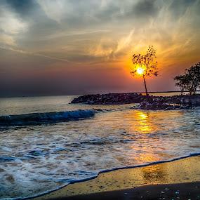 tree on fire by Dugalan Poto - Landscapes Sunsets & Sunrises ( central java, indonesia, dugalan, wave, shine, sunrise, beach, burn, morning, muarareja, tegal )