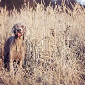 I said no!!! by Hanna Králíková - Animals - Dogs Portraits