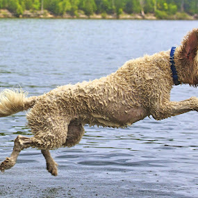 Hover Hound by Ross Bolen - Animals - Dogs Playing