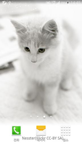 눈부신오후고양이배경