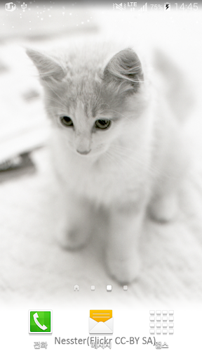 white shiny cat wallpaper