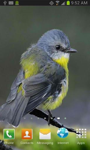 Cute Little Bird LWP Free