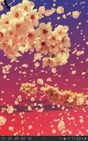 Screenshot of Sakura Live Wallpaper