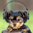 Симпатичная собака, щенок icon
