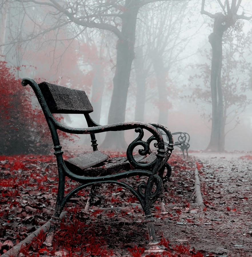 The Bench by Manuela Dedić - Artistic Objects Furniture ( park, bench, fog, furniture, mist, , Earth, Light, Landscapes, Views )