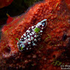 Geometric Nudibranch