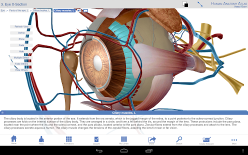 Human Anatomy Atlas Screenshot 18