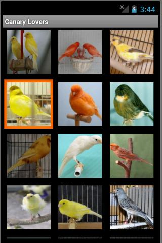 Canary Lovers - screenshot