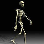 Cool Skeleton