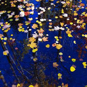 Reflections by LeeAnn Heikkila - Uncategorized All Uncategorized ( water reflection, reflection, fall colors, autumn, leaves )