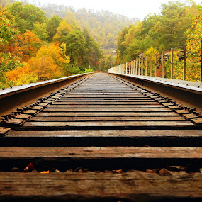 Laying Low by Stephanie Turner - Transportation Railway Tracks ( train tracks, fall leaves, railroad tracks, architectural detail, autumn color, transportation, travel,  )