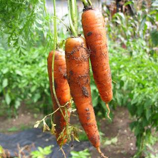 Leeks & Carrot Quiche