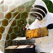 Beekeeping How To Guide Free