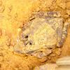 Sapo - Frog