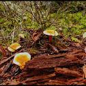Unknown Mushrooms