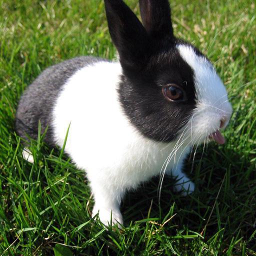 ウサギの壁紙 個人化 LOGO-玩APPs