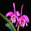 3D Orchid 6 logo