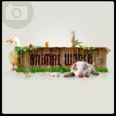 Animal World PE