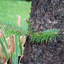 Pine, Bamboo, Bug, Flowers