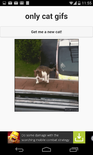only cat gifs