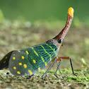 Intricate Lantern Bug