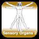 Anatomy - Sensory Organs 2