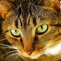 Cat Puzzles icon